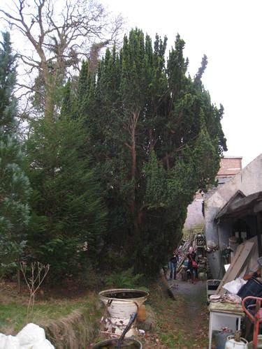 If d'Irlande<br>Watermael-Boitsfort Parc de Jolymont Rue Middelbourg, 70