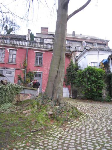 Hêtre pourpre – Watermael-Boitsfort, Parc de Jolymont, Rue Middelbourg, 70 –  26 Novembre 2009