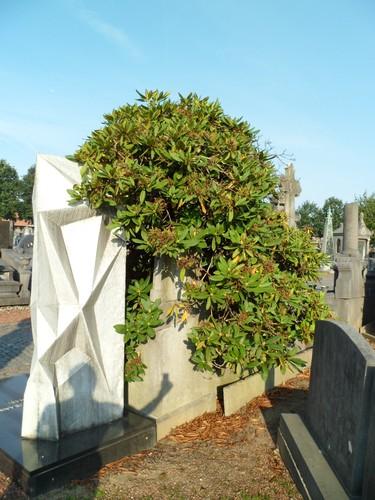 Rhododendron sp. – Molenbeek-Saint-Jean, Cimetière de Molenbeek-Saint-Jean, Chaussée de Gand, 535 –  04 Septembre 2012
