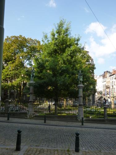 Chêne des marais – Bruxelles, Square du Petit Sablon , Place du Petit Sablon –  24 Juillet 2014