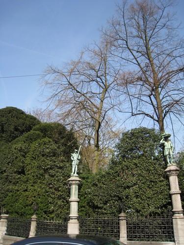 Zomerlinde – Brussel, Plantsoen van de Kleine Zavel, Kleine Zavel –  09 April 2010