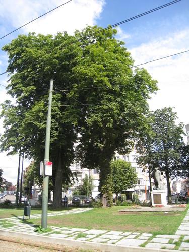 Marronnier commun – Uccle, Rond-point Winston Churchill –  19 Août 2010
