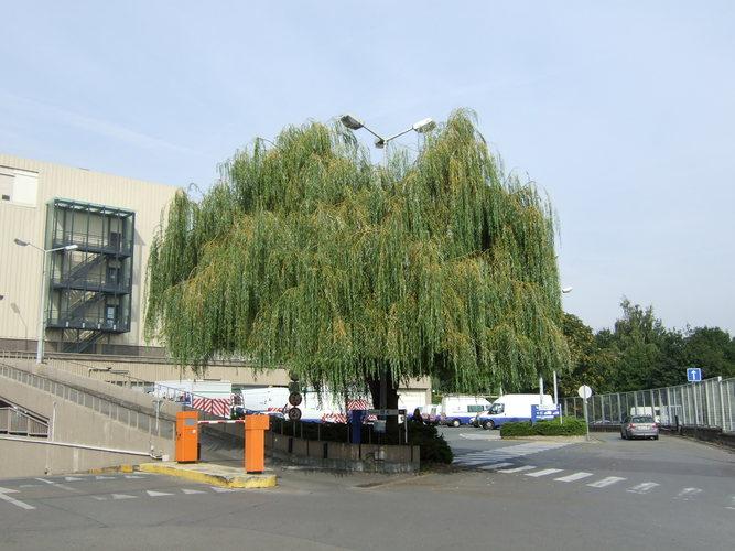 Treurwilg – Brussel, Werkhuizenkaai, 16 –  23 September 2010