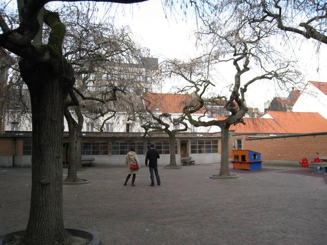 Frêne pleureur – Schaerbeek, Avenue de Roodebeek, 103 –  20 Mars 2012