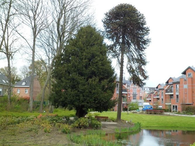 Venijnboom – Sint-Jans-Molenbeek, Ninoofsesteenweg, 1005 –  23 April 2012