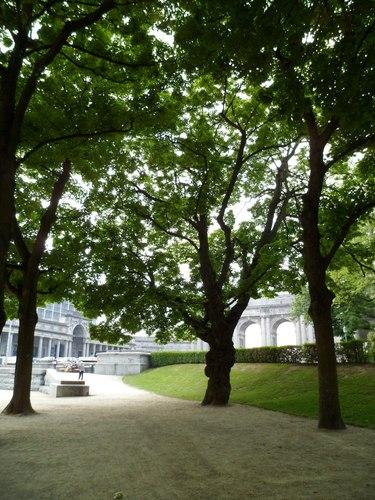 Erable plane – Bruxelles, Parc du Cinquantenaire –  29 Mai 2012