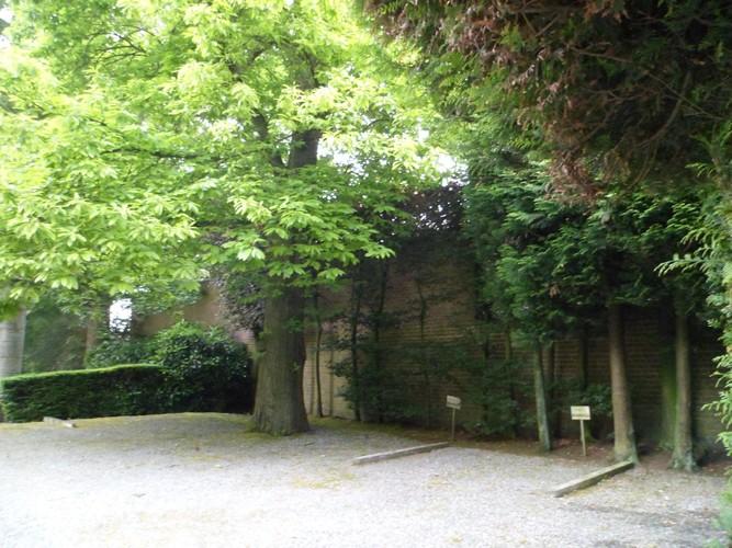 Tamme kastanje – Brussel, Waterloosesteenweg, 880 –  01 Juni 2012