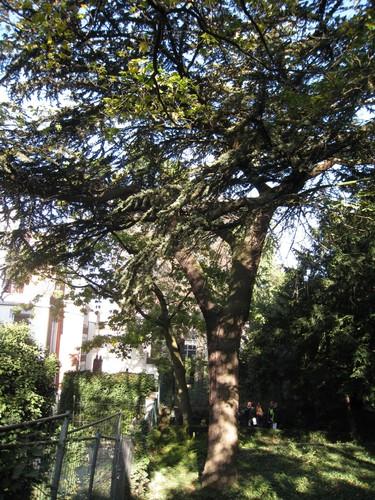 Libanonceder – Brussel, Egmontpark –  15 Oktober 2009