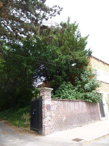 If commun – Bruxelles, Donderberg, Rue des Horticulteurs –  25 Juin 2013