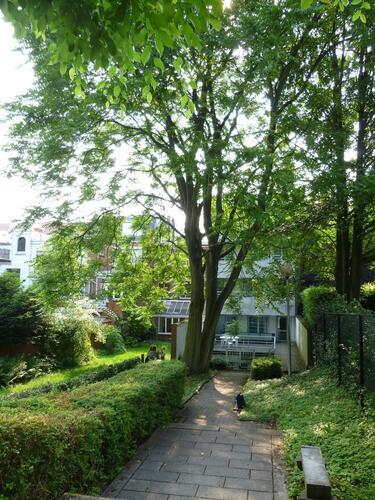 Ailante glanduleux – Etterbeek, Rue Charles De Buck, 23 –  25 Juin 2013