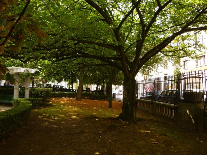 Cerisier du Japon – Saint-Josse-Ten-Noode, Square Armand Steurs, Square Armand Steurs –  14 Août 2013