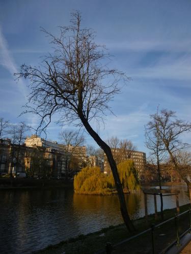 Aubépine à un style/ Epine blanche – Ixelles, Etangs d'Ixelles, Avenue des Eperons d'Or –  13 Décembre 2013