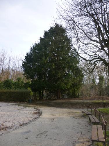 If commun – Schaerbeek, Parc Josaphat, Avenue Voltaire –  22 Janvier 2013