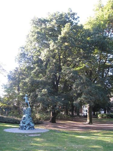 Chêne de Turner<br>Bruxelles Parc d'Egmont