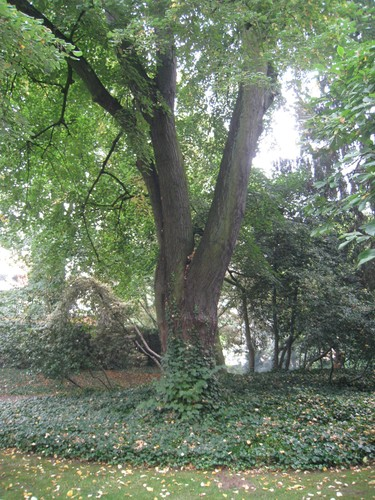 Treurzilverlinde – Elsene, Solvaypark, Elyzeese Veldenstraat, 43 –  24 September 2014