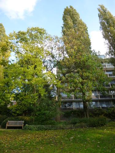 Koninginneboom – Elsene, Tenboschpark –  27 Oktober 2014