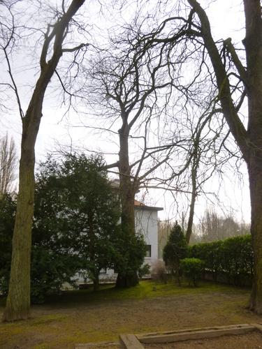 Châtaignier – Jette, Parc de la clinique Sans Souci, Avenue de l'Exposition Universelle, 218 –  06 Mars 2015