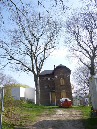 Frêne commun – Berchem-Sainte-Agathe, Rue Hogenbos, 38 –  16 Avril 2015