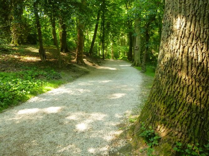 Chêne pédonculé – Uccle, Parc de la Sauvagère –  05 Juin 2015