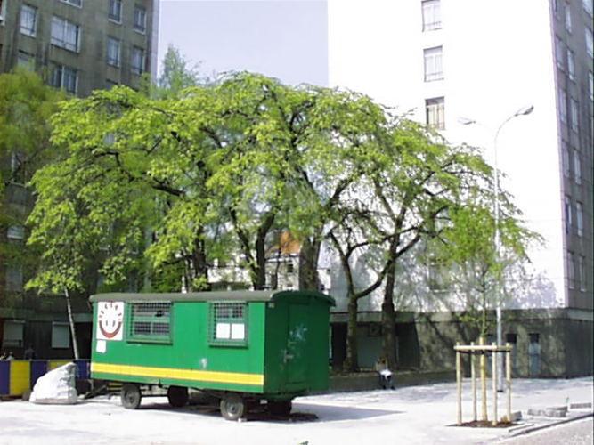 Orme commun/de montagne – Bruxelles, Rue du Rempart des Moines, 4 –  04 Avril 2002