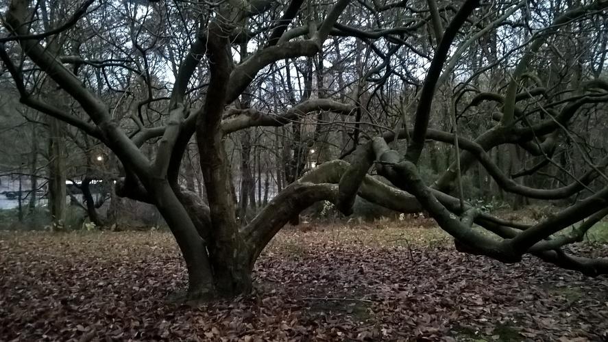 Beverboom – St.- Lambrechts - Woluwe, Lindekmalemolen en omgevingen, Jean-François Debeckerlaan, 48 –  15 December 2020