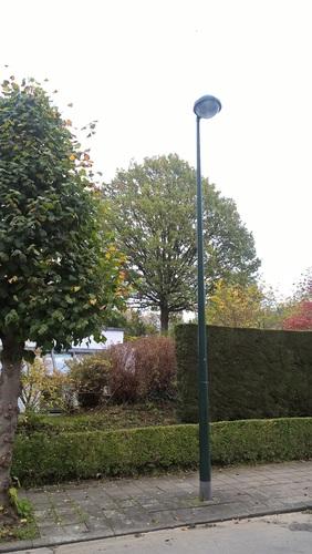 Chêne pédonculé – Auderghem, Rue Charles Pas, 21 –  26 Octobre 2017