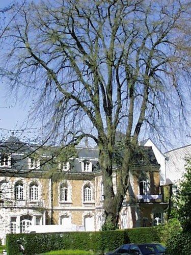Tilleul argenté – Schaerbeek, Place de Jamblinne de Meux, 3 –  05 Avril 2002
