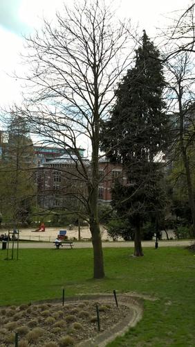 Châtaignier – Bruxelles, Parc Léopold –  12 Avril 2016