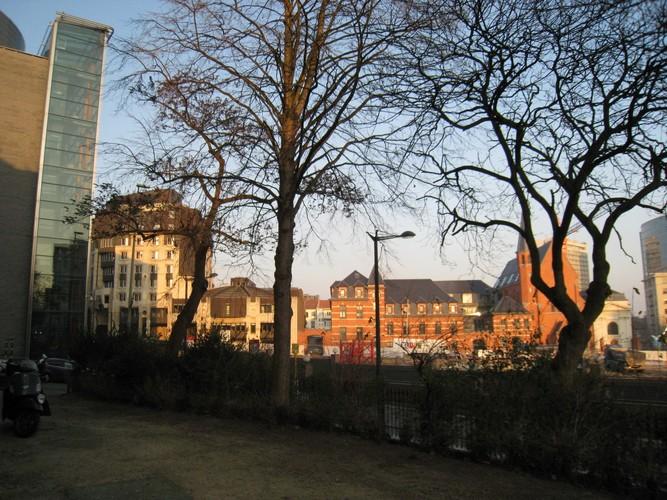 Koninginneboom – Brussel, Leopoldpark –  01 February 2012