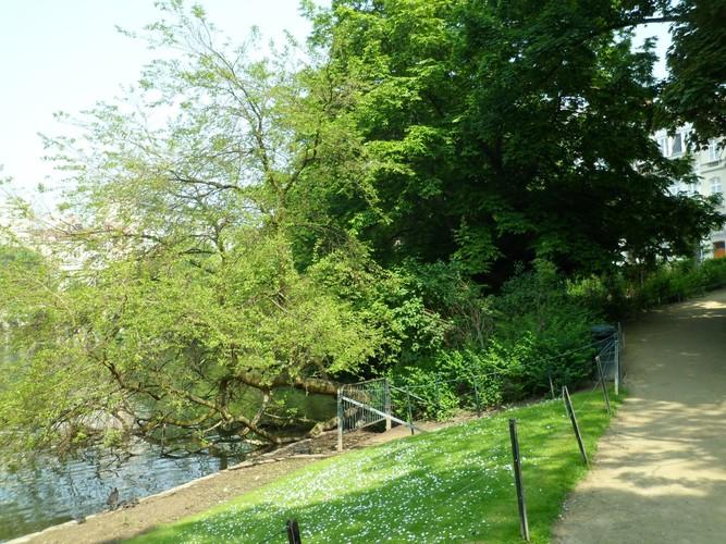 Mûrier blanc – Bruxelles, Square Ambiorix, Marie Louise, Marguerite et avenue Palmerston, Square Marie-Louise –  23 Mai 2012