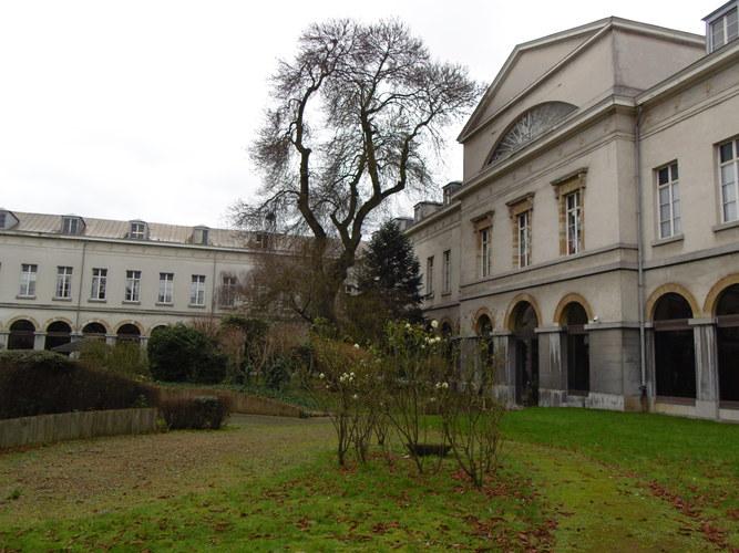 Frêne à feuilles étroites<br>Bruxelles Jardins de l'Hospice Pachéco