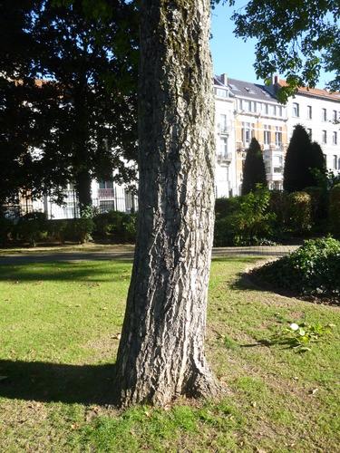 Noyer royal bruxelles parc du fonds de pension ibm for Rue joseph dujardin 8 anderlecht