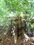Platane à feuille d'érable – Etterbeek, Jardin Jean Félix Hap –  15 Octobre 2014