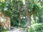 Erable sycomore – Etterbeek, Jardin Jean Félix Hap, parc –  24 Mai 2007