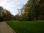 Bouleau verruqueux – Anderlecht, Parc Astrid –  30 Octobre 2014