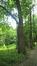 Tamme kastanje – Vorst, Jacques Brel park, parc –  15 Juni 2016