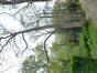 Tamme kastanje – Vorst, Jacques Brel park, parc –  30 April 2021