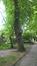 Châtaignier – Forest, Parc Jacques Brel, parc –  15 Juin 2015