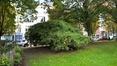 Ginkgo biloba 'Pendula' – Elsene, Tuinen van de Ter Kamerenabdij, parc –  24 Oktober 2017
