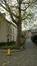 Platane à feuille d'érable – Ixelles, Jardins de l'Abbaye de la Cambre –  14 Novembre 2017