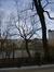 Ptérocaryer à feuilles de frêne – Ixelles, Etangs d'Ixelles, Avenue du Général de Gaulle –  07 Janvier 2014