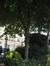 Marronnier du Japon – Ixelles, Parc Tenbosch –  24 Juin 2008