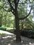 Micocoulier d'Amérique – Ixelles, Parc Tenbosch –  24 Juin 2008