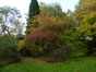 Oosterse amberboom – Elsene, Tenboschpark –  27 Oktober 2014