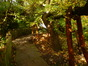 Copalme d'Orient – Ixelles, Parc Tenbosch –  27 Octobre 2014