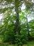 Hêtre pourpre – Jette, Parc Titeca, Avenue de l'Exposition Universelle –  30 Juillet 2013
