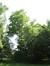 Amberboom – Jette, Titecapark, Dieleghemdreef, 79 –  10 Juli 2013