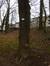 Févier d'Amérique – Molenbeek-Saint-Jean, Parc Marie José –  11 Février 2015