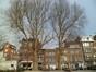 Platane à feuille d'érable – Molenbeek-Saint-Jean, Square des Libérateurs –  12 Mars 2012
