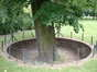Zilverlinde – Schaarbeek, Albertpark of Terdelt, Rector Van Waeyenberghdreef –  04 Juni 2002